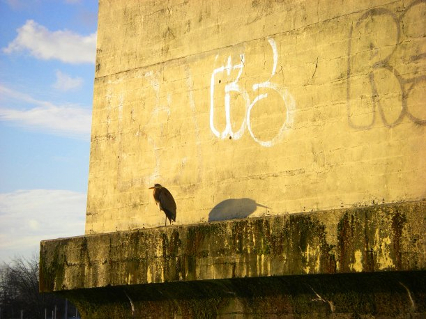 heron suntanning by the Burrard Bridge along the Vancouver seawall