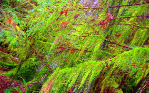 Fairy Wilderness in spring, hiding under soft green of old man's beard.